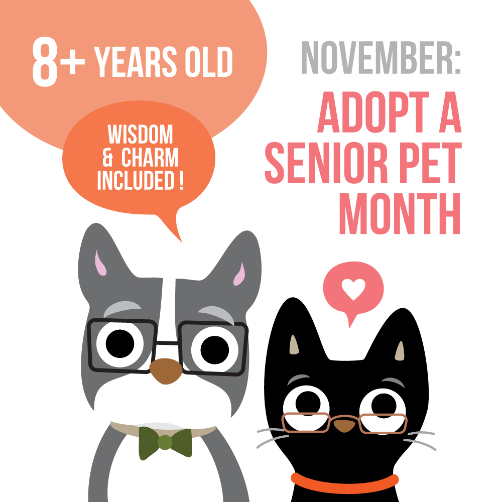 adopt-a-senior-pet-2.jpg