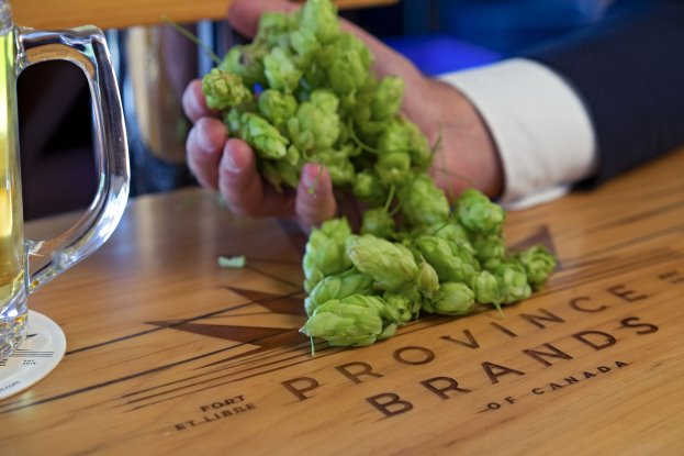 Hops in Hand by Beer Glass