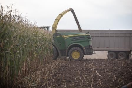 Unified corn silage harvest.jpg