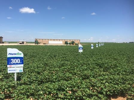 PhytoGen cottonseed trials with field signs.jpg