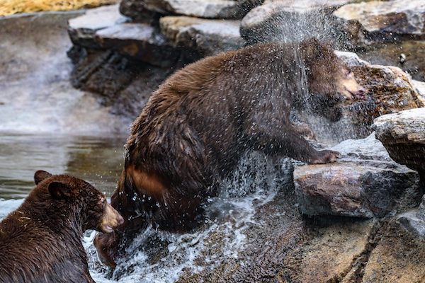 Black Bears 20180111-38.jpg