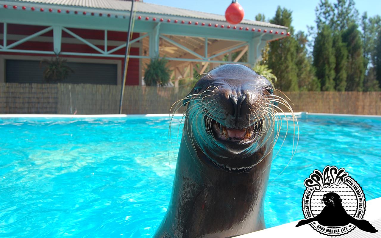 Sea-Lion-Sparky-Wallpaper-1280x800.jpg