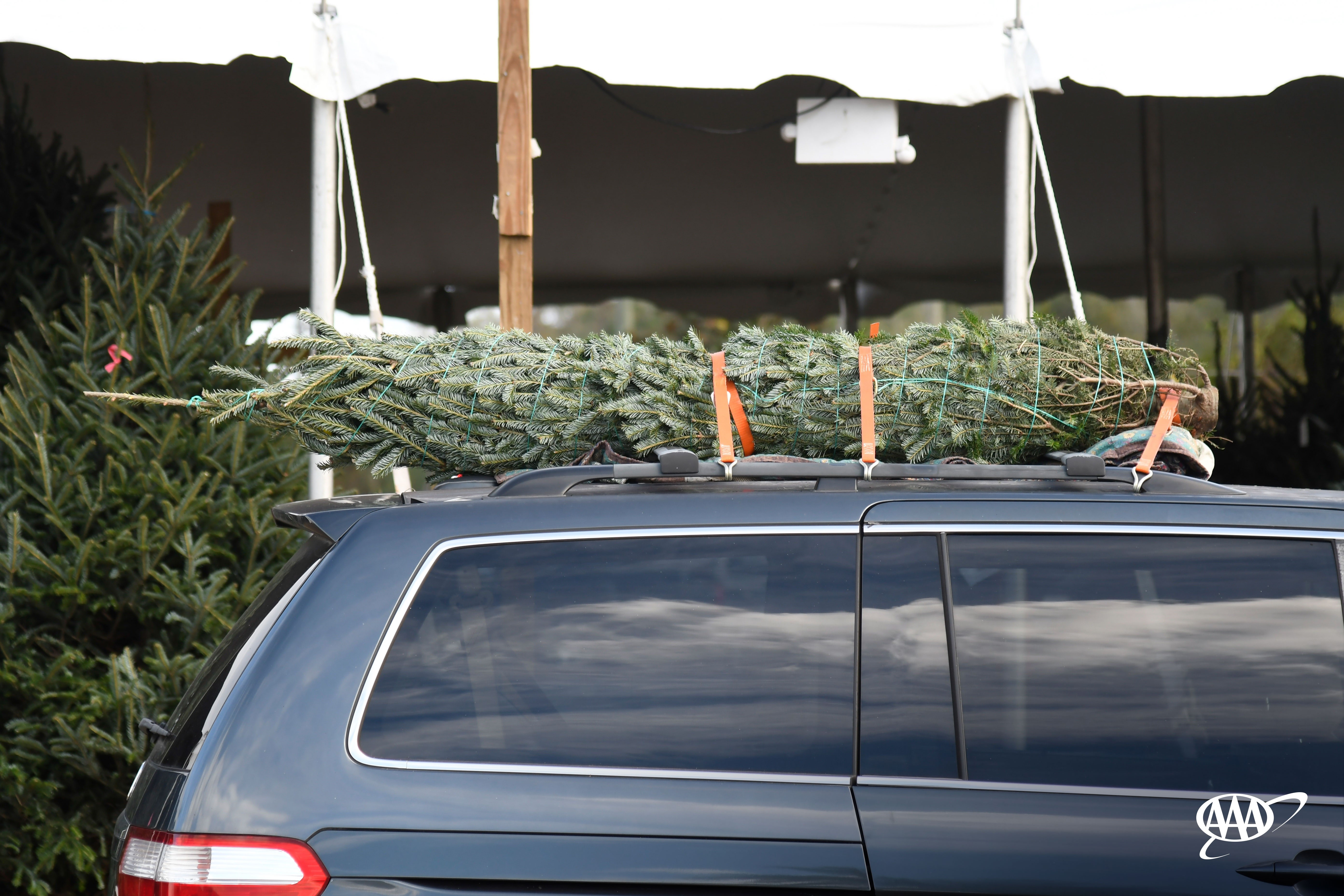 AAA Urges Drivers to Safely Secure Christmas Trees